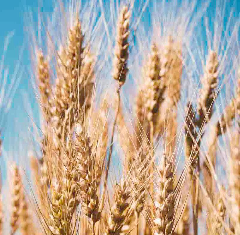 clasificación y tipos de harinas
